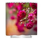 Roses Peace Shower Curtain
