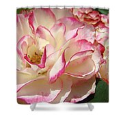 Roses Pink White Rose Flowers 4 Rose Garden Artwork Baslee Troutman Shower Curtain