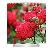 Roses Spring Scene Shower Curtain