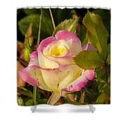 Roses Warm Hearts Shower Curtain