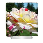 Roses White Pink Yellow Rose Flowers 3 Rose Garden Art Baslee Troutman Shower Curtain