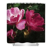 Roses With Texture Shower Curtain