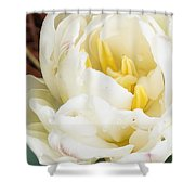 Rosey Tulip Shower Curtain