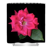 Rosie Posie Shower Curtain