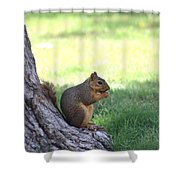 Roswell Squirrel Shower Curtain