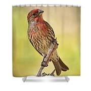 Rosy Finch Macro Shower Curtain