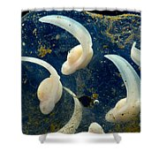 Rosy Ground Frog Eggs Shower Curtain