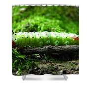 Rosy Maple Moth Caterpillar Shower Curtain