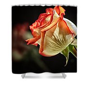 Rosy Red Reflections Shower Curtain