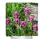 Rosy Wildflowers Shower Curtain