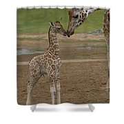 Rothschild Giraffe Giraffa Shower Curtain by San Diego Zoo