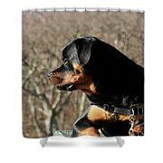 Rottie Profile Shower Curtain