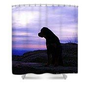 Rottweiler Sunrise 1 Shower Curtain