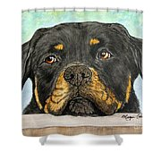 Rottweiler's Sweet Face 2 Shower Curtain by Megan Cohen