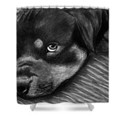 Rotty Shower Curtain