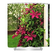 Rouge Cardinal Clematis 2 Shower Curtain