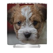Rough Coat Jrt Pup Shower Curtain