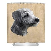 Rough Coated Lurcher  Shower Curtain