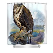 Rough Legged Buzzard Hawk Antique Bird Print The Birds Of Great Britain Shower Curtain