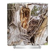 Rough Tree Shower Curtain