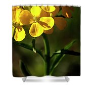 Rough Wallflower  -  60618-122 Shower Curtain