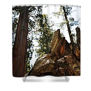 Round Meadow Giant Sequoia Shower Curtain