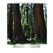 Round Meadow Sequoia Family Portrait Shower Curtain