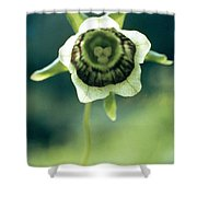 Roundleaf Asiabell Shower Curtain