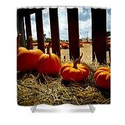 Row Of Pumpkins Sitting Shower Curtain