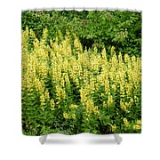 Row Of Yellow Flowers Shower Curtain