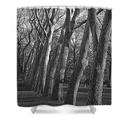 Row Trees Shower Curtain