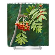 Rowan Tree Shower Curtain