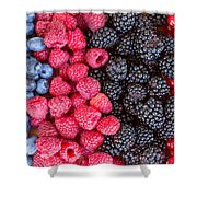 Rows Of  Berries  Shower Curtain