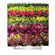 Rows Of Bromeliads Shower Curtain