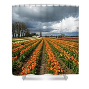 Rows Of Colorful Tulips At Festival Shower Curtain