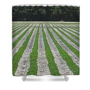 Rows Of Crops Shower Curtain