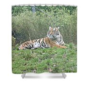 Royal Bengal Tiger Shower Curtain