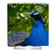 Royal Bird Shower Curtain