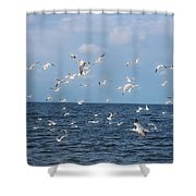 Royal Blue Ocean Tern Shower Curtain