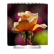 Royal Colors Shower Curtain