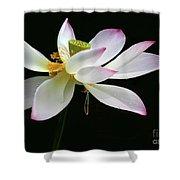 Royal Lotus Shower Curtain