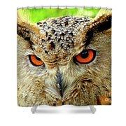 Royal Owl Shower Curtain