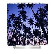 Royal Palm Grove Shower Curtain