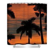 Royal Palms Shower Curtain