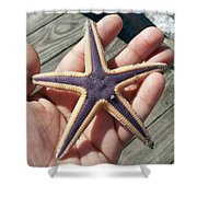 Royal Starfish. . Shower Curtain