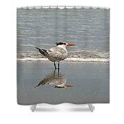 Royal Tern Reflection Shower Curtain