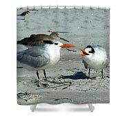 Royal Terns Shower Curtain