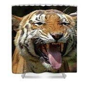 Royal Tiger Shower Curtain