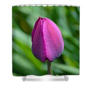 Royal Tulip Shower Curtain
