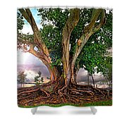 Rubber Tree Shower Curtain